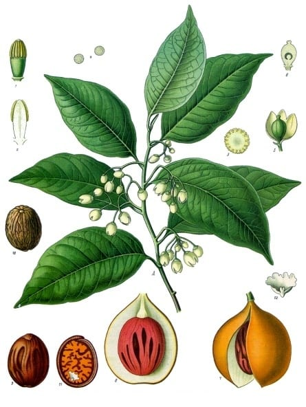 Gin Botanical Profile: Nutmeg